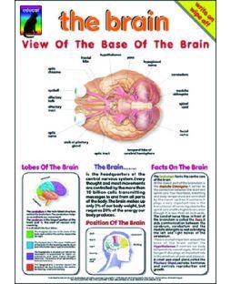Brain, chart