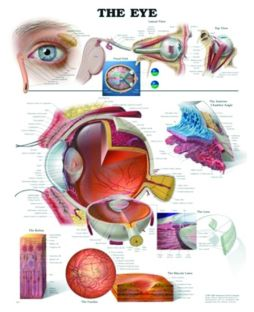 Chart,  The Eye, (Bachin)  50 x 66cm.