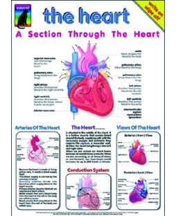 The Heart, Chart