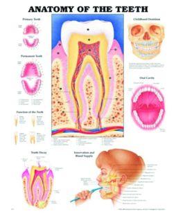 Chart,  The Teeth, (Bachin) 50 x 66cm.