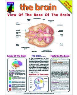 Chart, Brain