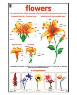 Flowers, chart