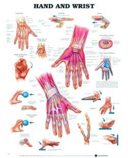 Chart,  Hand & Wrist, (Bachin) 50 x 66cm