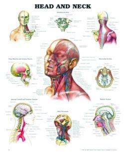 Chart,  Head & Neck, (Bachin) 50 x 66cm