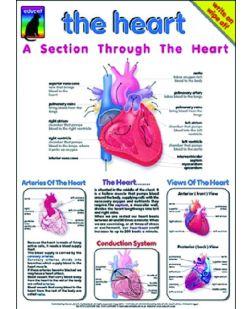 Chart, The Heart