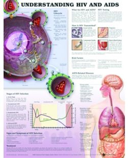 Chart,  Understanding HIV & Aids, (Bachin), 50 x 66cm.