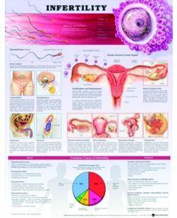 Chart,  Infertility, (Bachin)  50 x 66cm