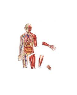 Magnetic human body