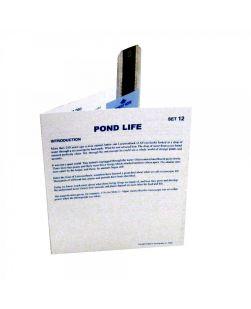 Microslides, Pond Life
