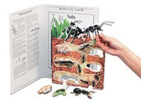 Book plus models - ant lifecycle