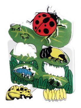 Book plus models - ladybug lifecycle