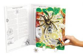 Book plus models - spider lifecycle