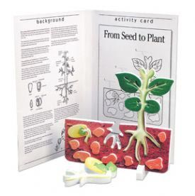 Book plus models - seed to plant lifecycle