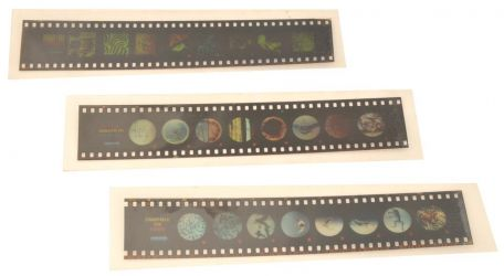 Microslides, Fern - The Life Cycle