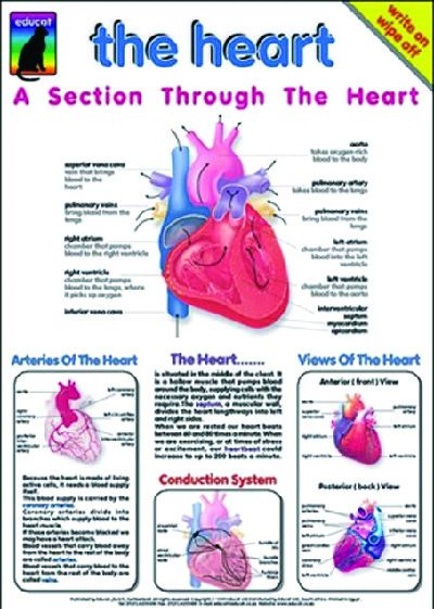 The Heart, Chart