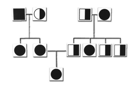 Genetic and Inheritance Magnetic Cards
