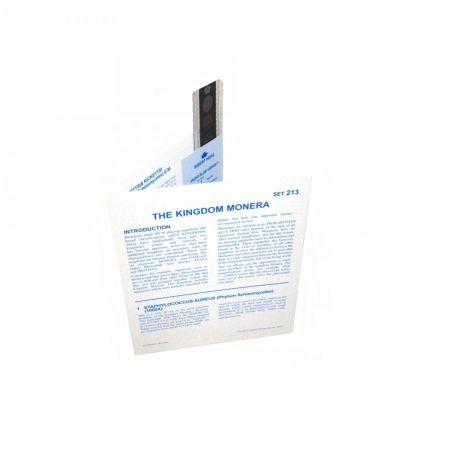 Microslides, The Kingdom Monera