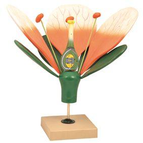 Flower, 3D, deluxe