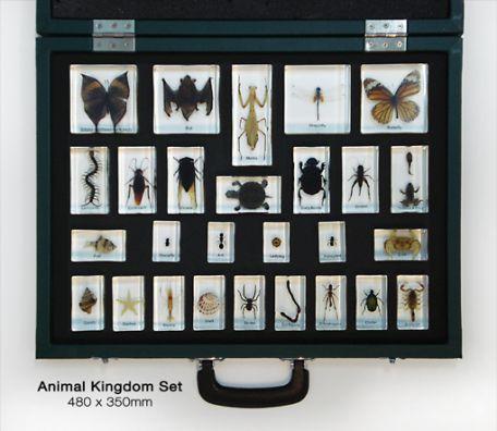 Animal Kingdom Set, 27 specimens
