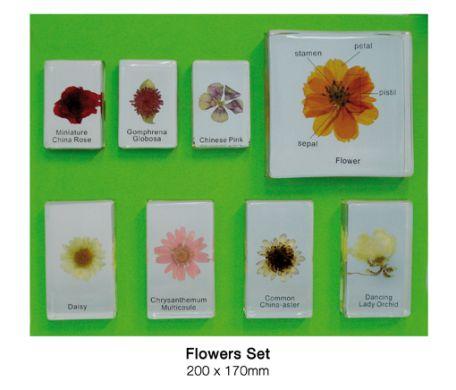 Flowers Set, 8 specimens
