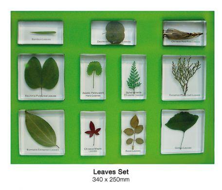 Leaves Set, 11 specimens