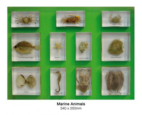 Marine Animals, 11 specimens