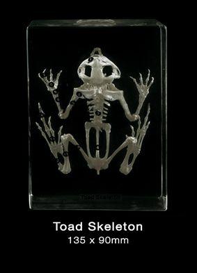 Skeleton, Toad/Frog