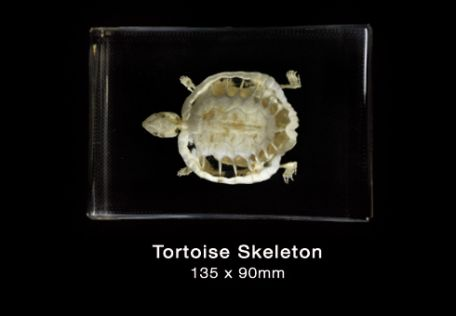 Skeleton, Tortoise (no keycard)