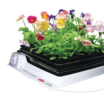 Propagation tray, with thermostat