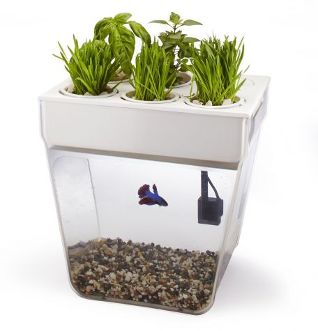 Fish Tank and Water Garden 2.0