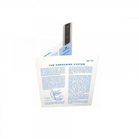 Microslides, The Endocrine System