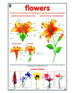 Set of 4 Plant charts